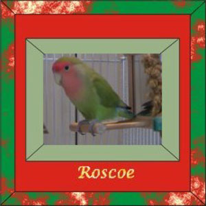 Roscoe's frame made larger 300 wid & hgt